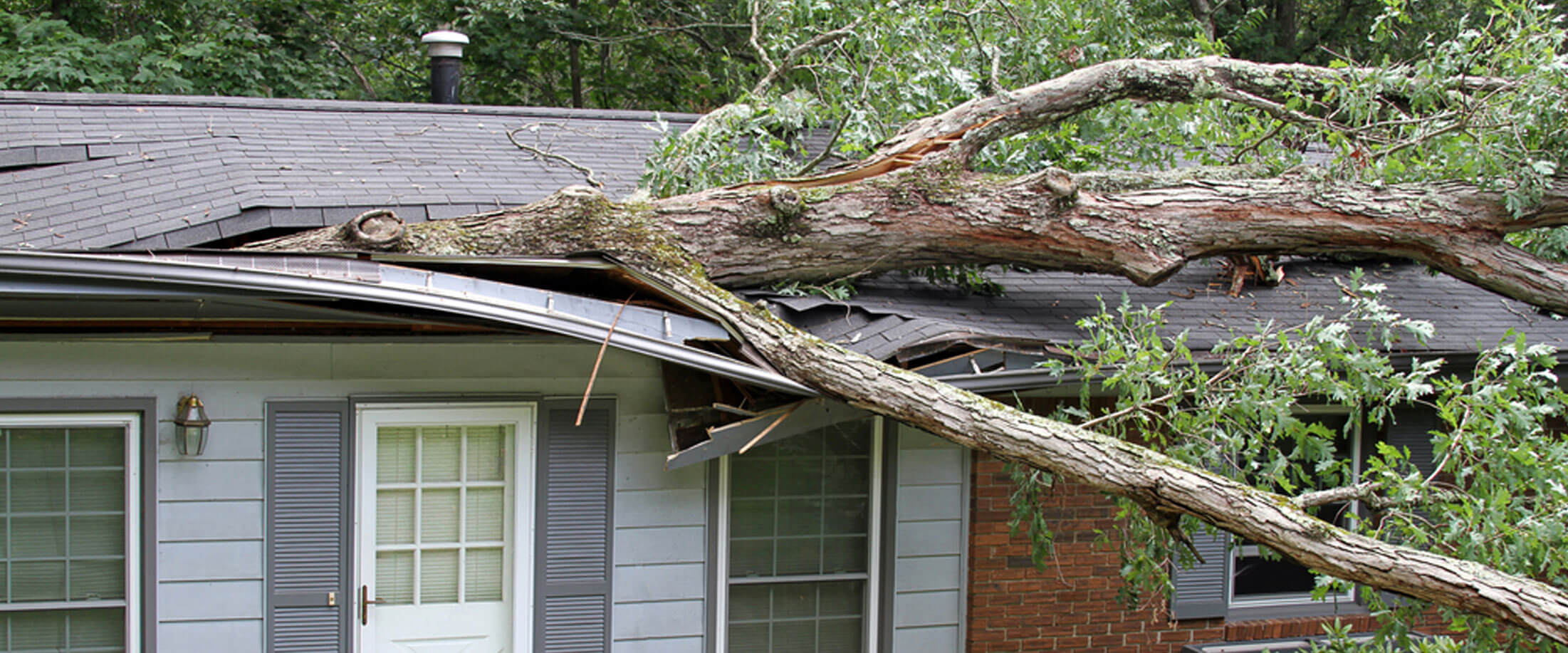 Roof of a home with a large tree laying on it